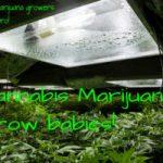 Cannabis Growers